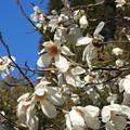 Photos: 春1
