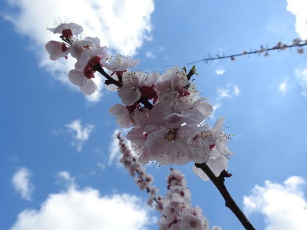 Photos: 春3