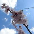 写真: 春3