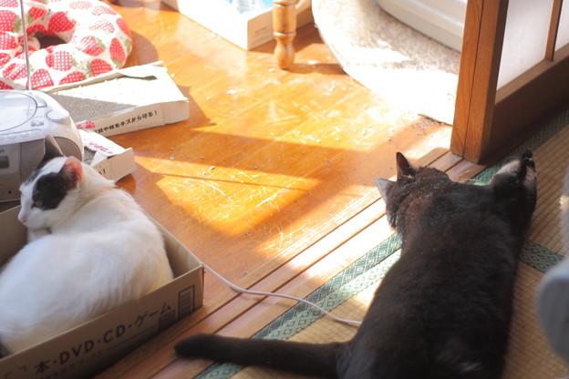 写真: 伸びるノエルと丸まるマカロン