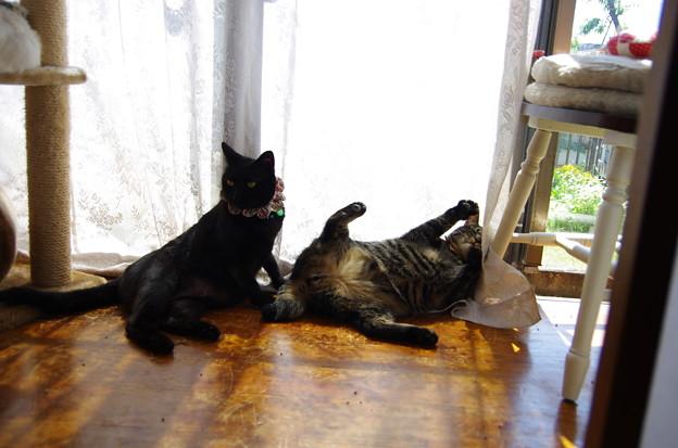 写真: 冷静な姉とハイな弟