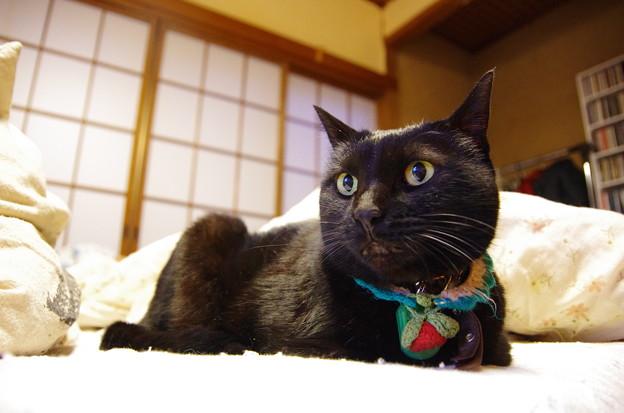 どや顔黒猫