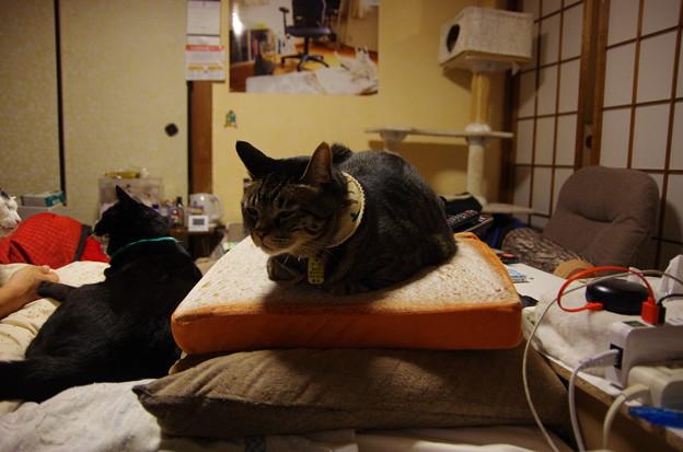 トースター猫と怒っている猫