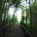 藪の向こう