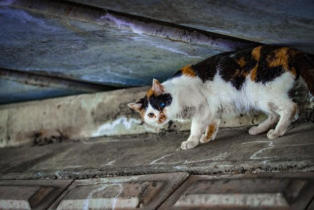 Photos: 橋の下の片目猫@鴻巣(元荒川)