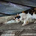 写真: 橋の下の片目猫@鴻巣(元荒川)