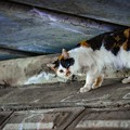 橋の下の片目猫@鴻巣(元荒川)
