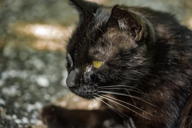 写真: 黒猫@八丁湖