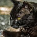 黒猫@八丁湖