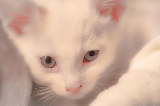 もらってきた猫@ウチ