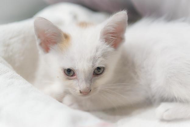 もらってきた猫2@ウチ
