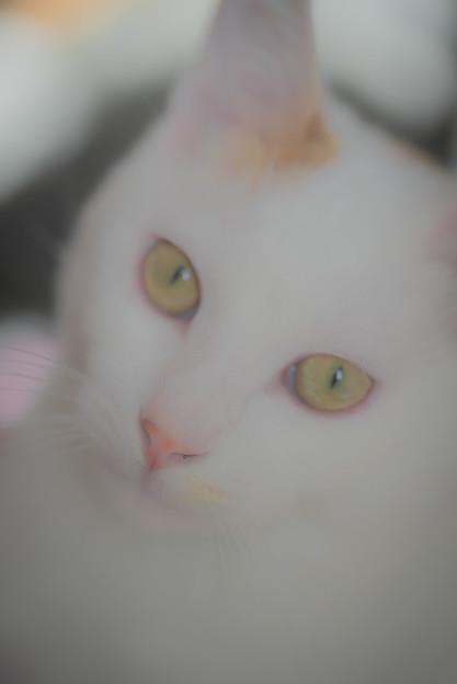 うちの猫@ウチ
