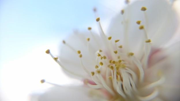春よこい♪早く来い♪♪