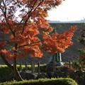 Photos: 紅葉と銅像