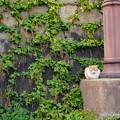 写真: 坂道の猫
