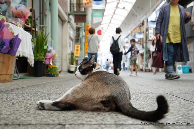 Photos: 商店街のレディーにゃん