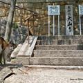 Photos: キジシロ三毛