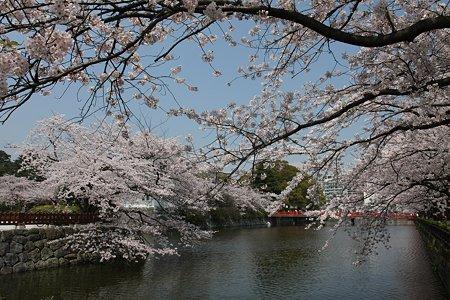 2009.04.07 小田原城 染井吉野