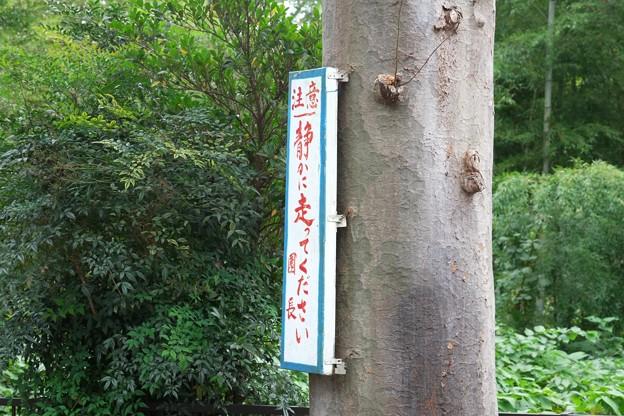 2015.10.21 下川井 幼稚園 痛い看板