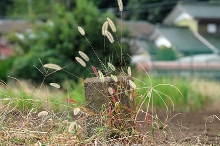 2015.10.29 和泉川 土地境界標識