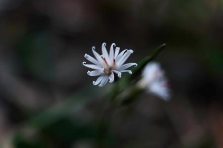2015.11.01 瀬谷市民の森 キッコウハグマ