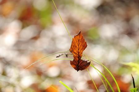 2015.12.06 瀬谷市民の森 枯葉