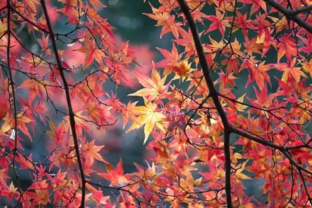 2015.12.12 大池公園 モミジ 赤黄橙緑