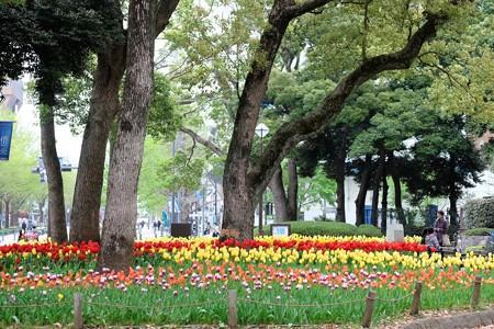 2016.04.11 横浜公園 チューリップ 園