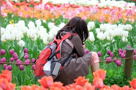 2016.04.11 横浜公園 チューリップ 集中