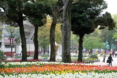 2016.04.11 横浜公園 チューリップ 噴水
