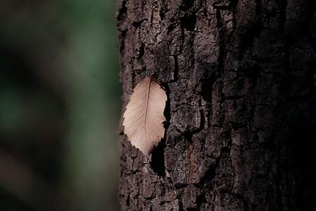 2018.02.08 追分市民の森 寒波に枯葉乾く