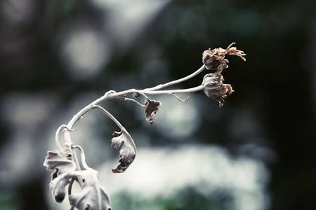 2018.02.21 追分市民の森 キク科 雑草 枯れ乾く