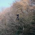 写真: 2018.03.12 和泉川 伐採