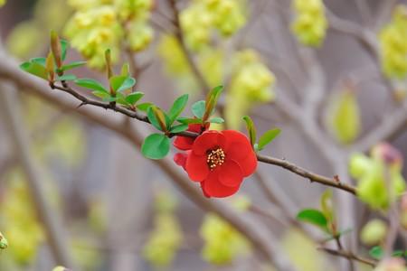 2018.03.19 和泉川 拝啓「土佐水木」とボケ