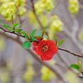 写真: 2018.03.19 和泉川 拝啓「土佐水木」とボケ