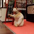 Photos: 2018.12.14 丸ビル 夏野 招き猫