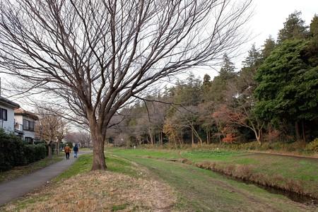2018.12.26 和泉川 サクラ