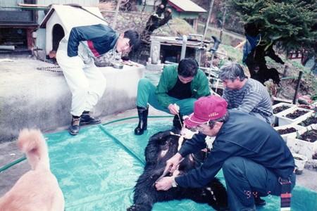 1994.05.01 飯豊 熊の解体-1