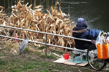 2019.02.26 和泉川 鮒釣り人と蒼鷺
