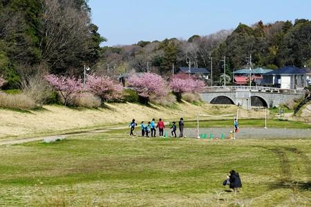2019.03.09 和泉川 河津・おかめ桜 共演