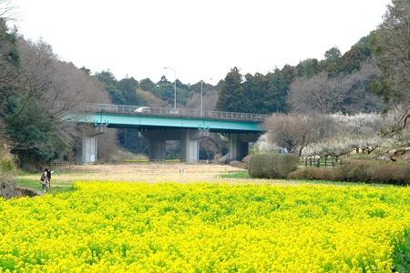 2019.03.10 追分市民の森 花畑