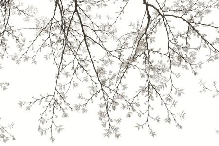 2019.04.14 和泉川 スモモ