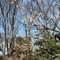 小石川後楽園-2