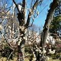 写真: 小石川後楽園-3