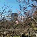 写真: 小石川後楽園-4