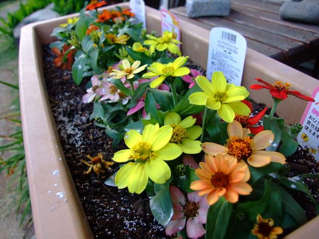 夏用の花に植え替え