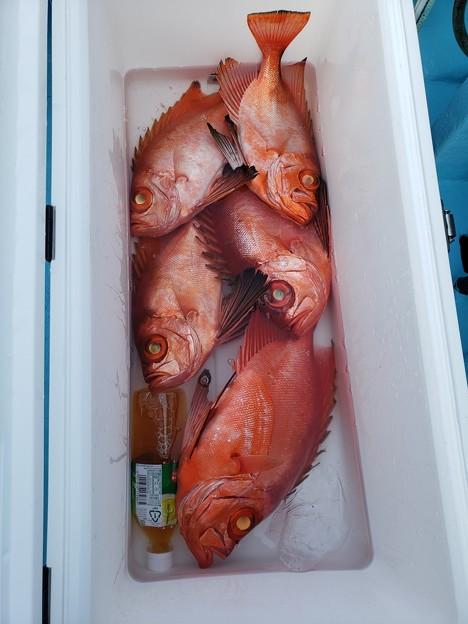 根魚五目釣り