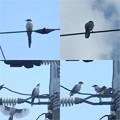 この鳥の名前は・・