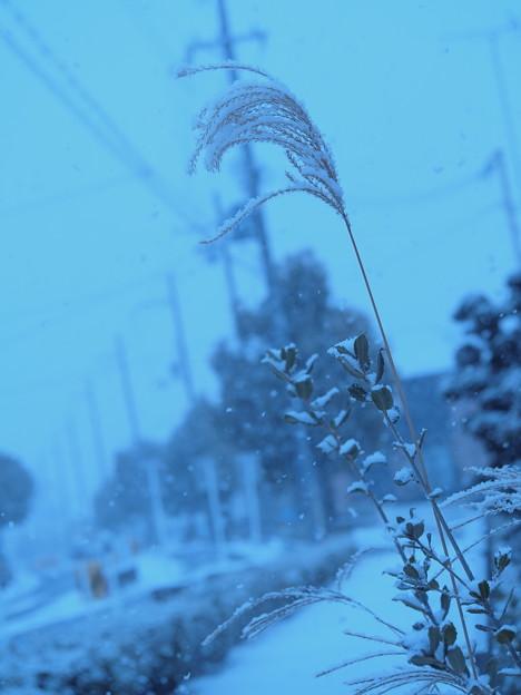 私の街にも雪が降りました。君の街はどうでしたか?