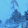 Photos: 私の街にも雪が降りました。君の街はどうでしたか?